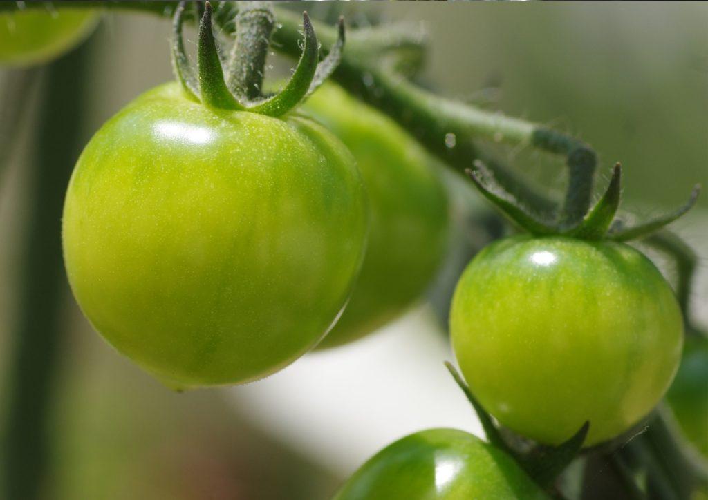 Chery Tomatoes